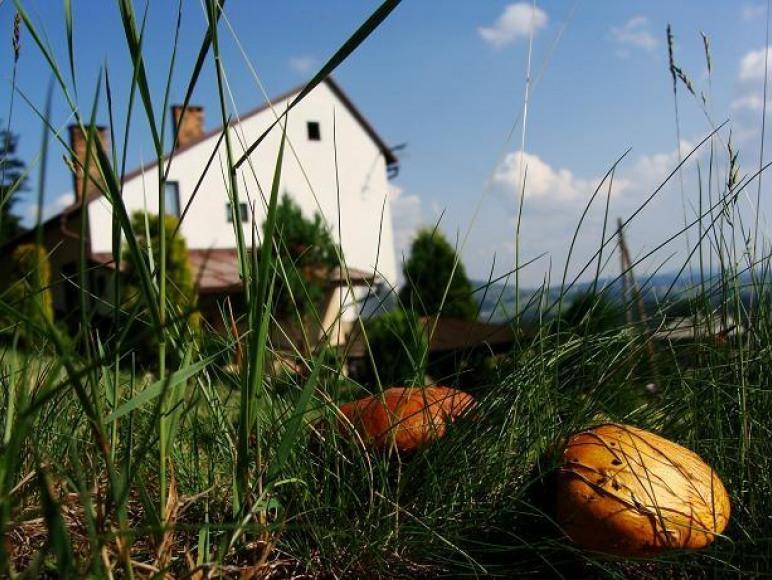 w pobliżu domu jesienią rośnie mnóstwo grzybów