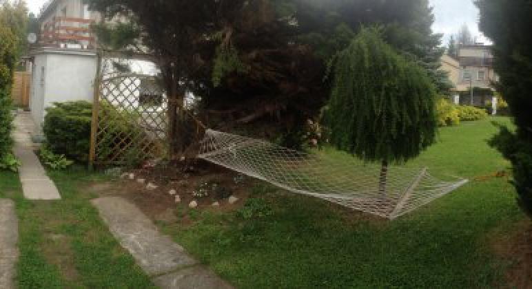 Hamak w ogrodzie