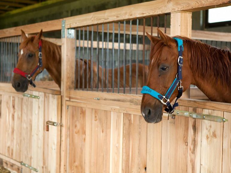 stajnia i hotel dla koni