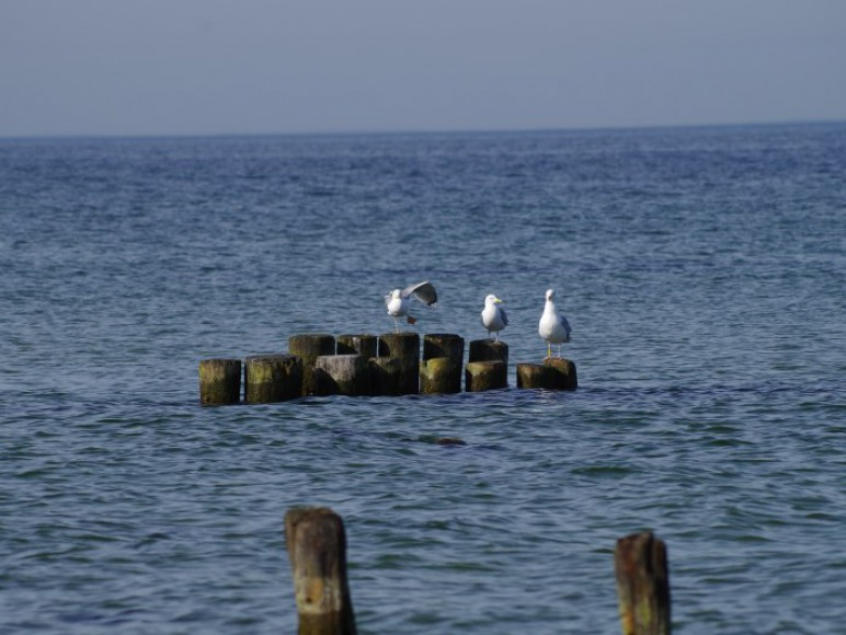 Baltic Bay