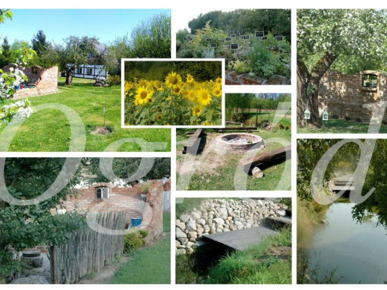 Ogród i najbliższe otoczenie