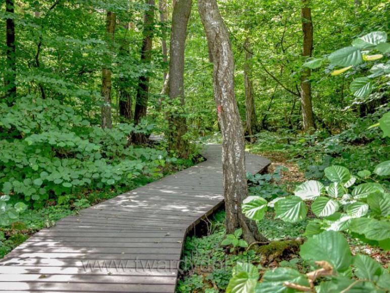 ścieżka ekologiczna