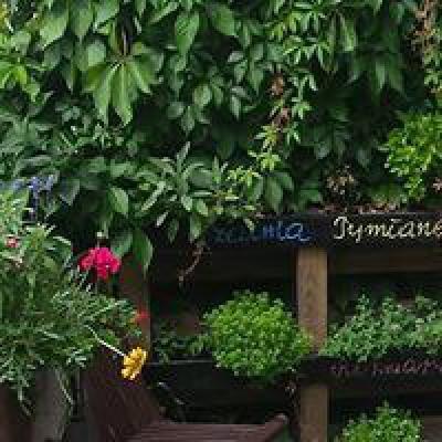 ziołowy zakatek na podwórku