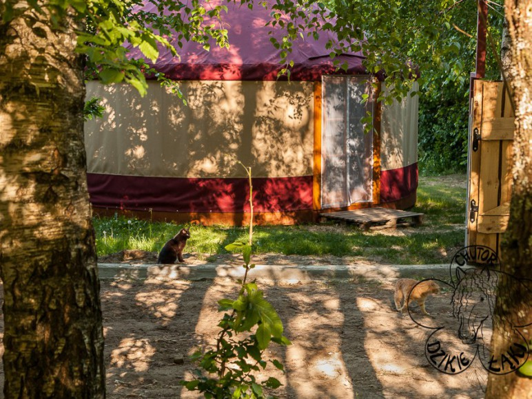 Całoroczna, nowoczesna jurta - wygodny namiot (łazienka, kuchnia, piecyk)