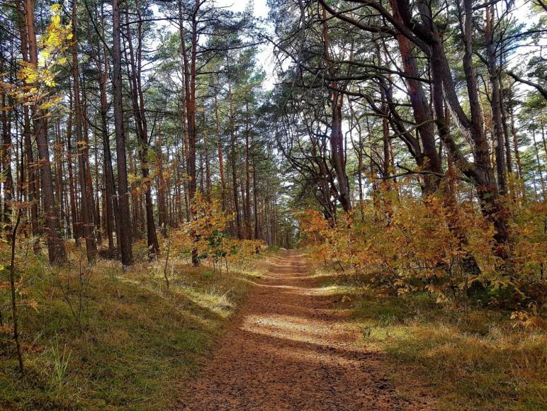 położenie w lesie