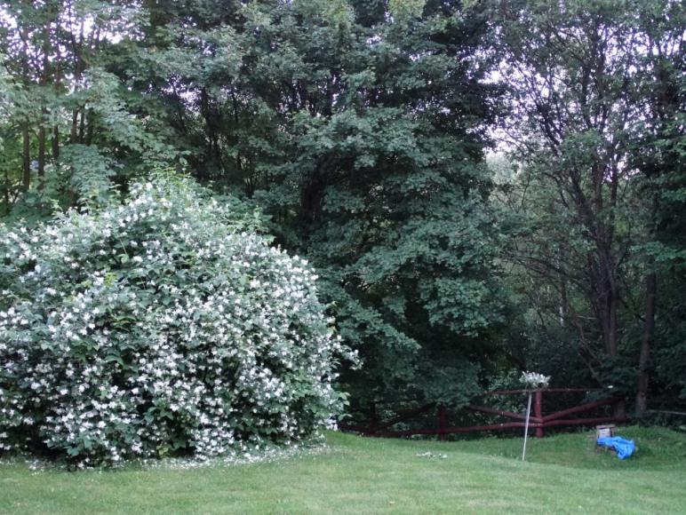 pachnie w czerwcu