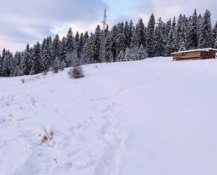 Obok domku znajduje się piękny las ;)