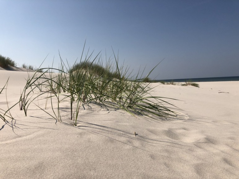 plaża kopalino