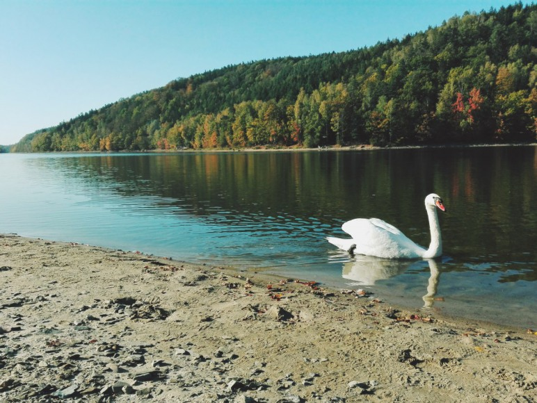 Jezioro Złotnickie