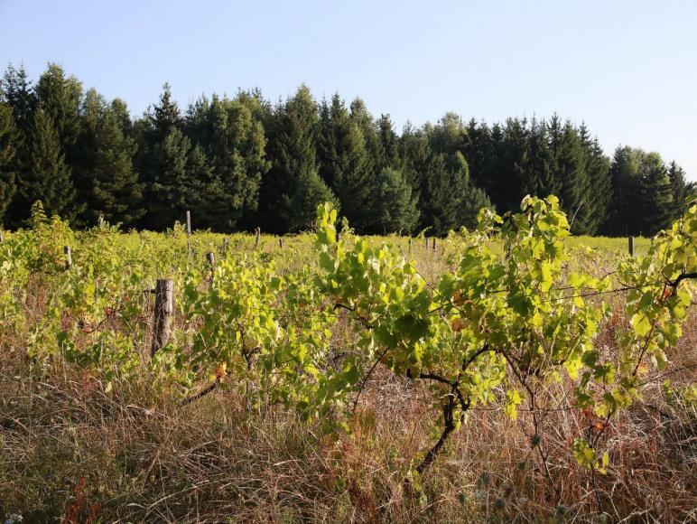Świerkowe Widoki Agroturystyka