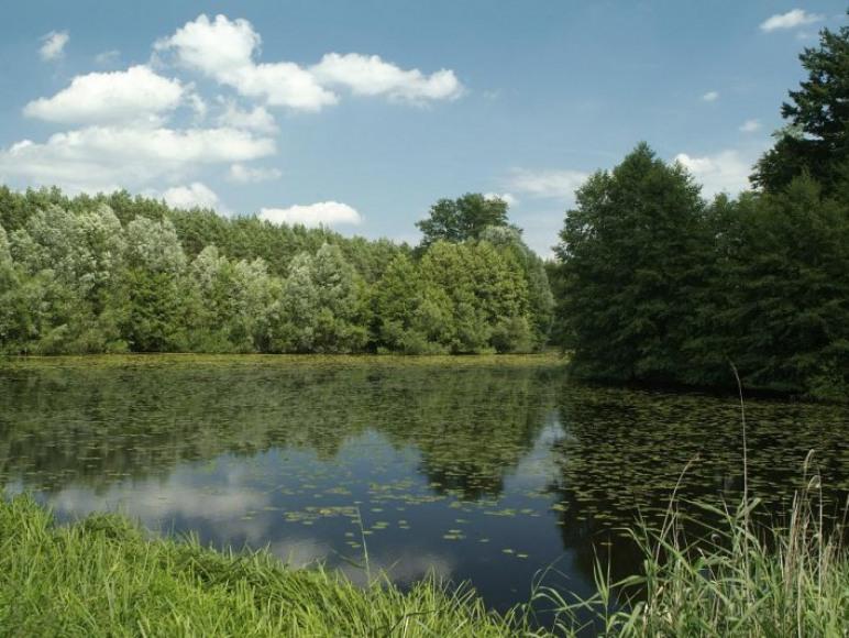 Prywatne jezioro na terenie obiektu