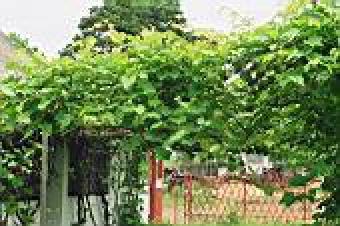 Kwatera Winnica