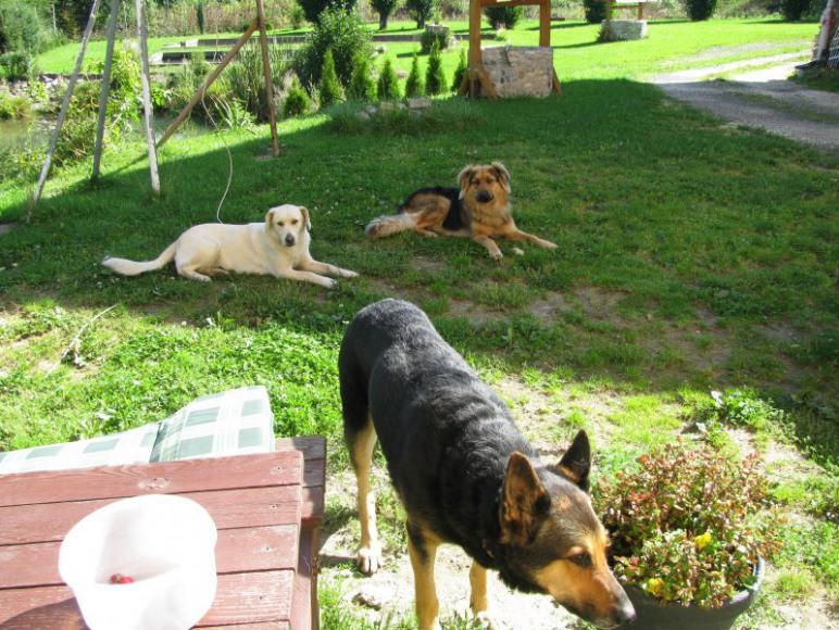 nasze psy