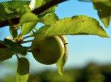 Agroturystyka Pod Bochenkową Górą