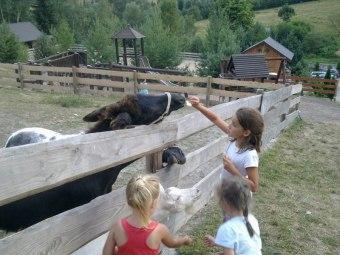 Agroturystyka Studzienno& Zagroda Rekreacyjna