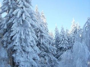 Skiing season - Ekokrasnoludki