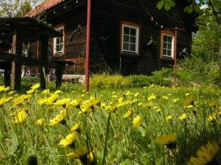 Summer holidays 2021 - Chata w Puszczy