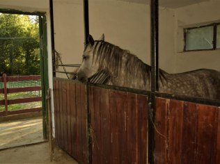 Stalls for horses - Dom na Krzemienicy- Dom całoroczny