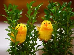 Easter in the Zameczek guest house - Pensjonat Zameczek